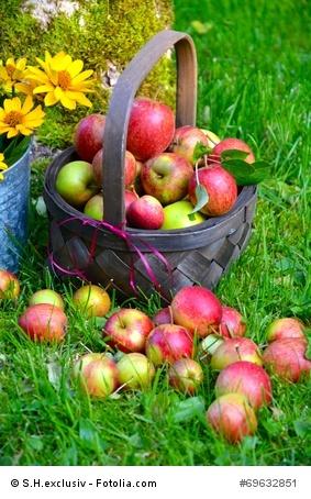Rekord-Apfel-Ernte im Jahr 2014