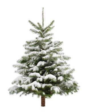 preis entstehung und besteuerung eines weihnachtsbaumes. Black Bedroom Furniture Sets. Home Design Ideas
