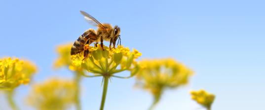 Die Lage der Bienen – zwischen Sorge und Hoffnung