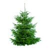 Weihnachtsbäume im Hofladen der Gut Wulksfelde GmbH in Tangstedt