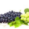 Weintrauben im ebl naturkost Bio-Fachmarkt Nürnberg-Mögeldorf