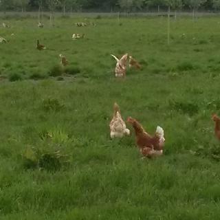 Hof Lüssing in Haren