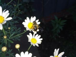 Imkerei Bienen-Honig.de in Ludwigsfelde