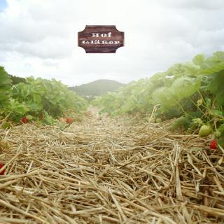 Hof Gläßer - Erdbeeren aus dem Westerwald in Breitenau