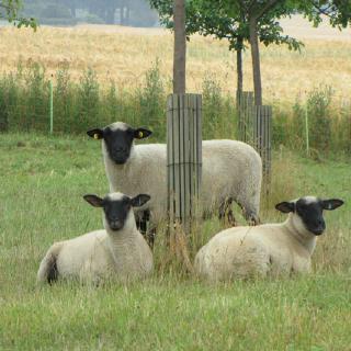 UMBio - Gutes aus der Uckermark in Oberuckersee