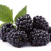 Brombeeren im Obsthof Mertens in Willich