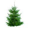Weihnachtsbäume im Buschhof Scheufen in Jüchen