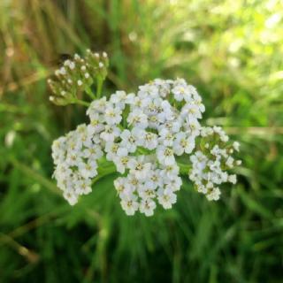 Butterblume Bio-& Reformwaren in Meiningen