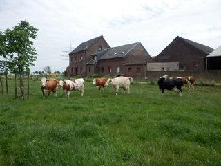 Fleckviehbetrieb Schauhof in Willich